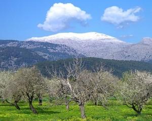 Schnee im Tramuntana Gebirge
